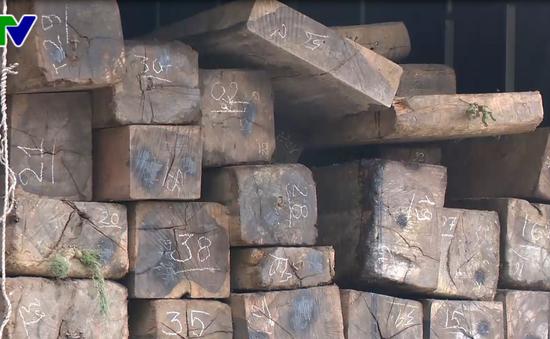 Thừa Thiên - Huế: Bắt xe chở 9 khối gỗ mun quý hiếm
