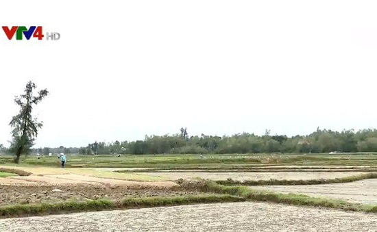 Thời tiết bất lợi làm khó ngành nông nghiệp miền Trung - Tây Nguyên