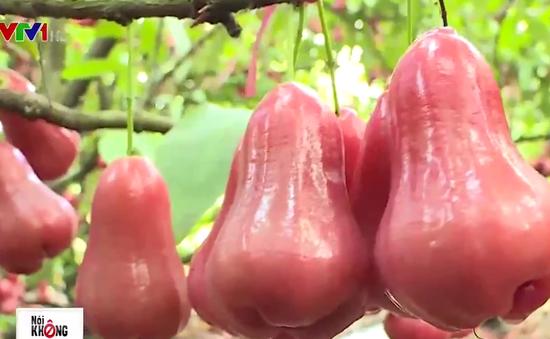 Hạn chế tối đa thuốc bảo vệ thực vật trên vườn hoa quả