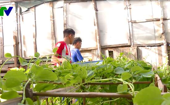 Gầy dựng vườn rau đảo Đá Đông, Trường Sa sau bão