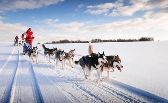 """Xe chó kéo - Dịch vụ du lịch siêu """"hot"""" ở Nga"""