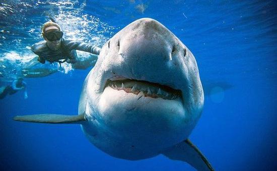 Phát hiện cá mập trắng khổng lồ ngoài khơi Hawaii
