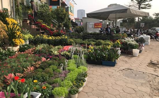 Rực rỡ phố hoa Hoàng Hoa Thám dịp cận Tết