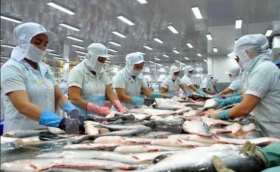 Triển vọng lớn với nuôi cá tra hữu cơ