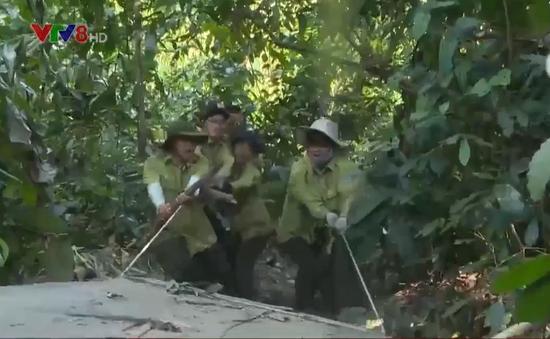 Quảng Nam: Gấp rút cải tổ bộ máy quản lý bảo vệ rừng