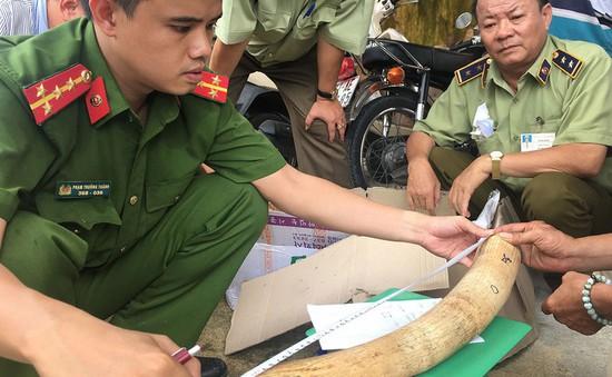 Bình Định: Phát hiện gần 18kg nghi ngà voi vận chuyển trái phép