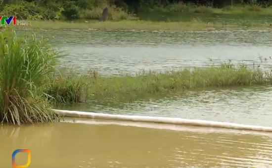 Công ty Nước sạch Sông Đà xử lý ô nhiễm dầu