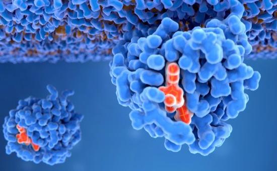 Tỉ lệ tử vong vì ung thư ở Việt Nam tăng mạnh do phát hiện muộn