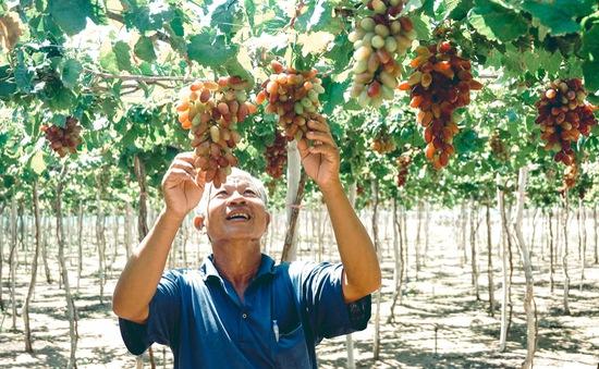 Tôn vinh và quảng bá văn hóa, du lịch Ninh Thuận tại Hà Nội