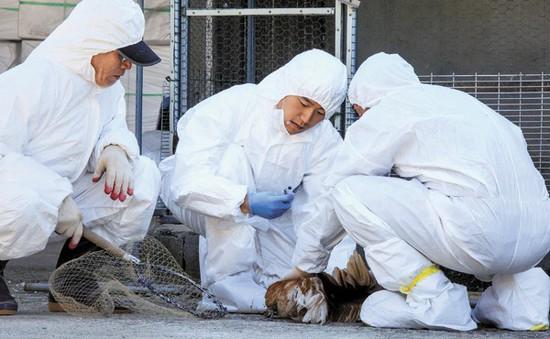 Xuất hiện ca nghi nhiễm virus cúm gia cầm có thể gây tử vong ở người tại Hàn Quốc