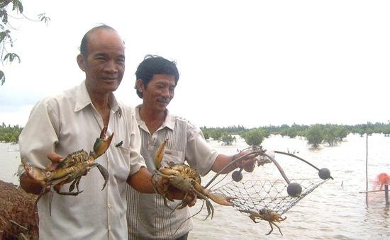 Cua biển Trà Vinh vào vụ thu hoạch đợt 2, giá cao