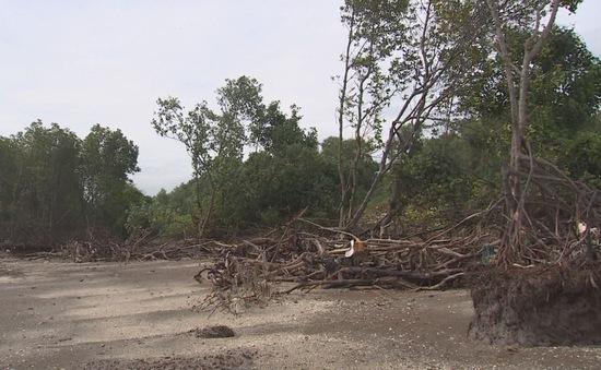 Mất hàng ngàn héc-ta rừng phòng hộ vì sạt lở