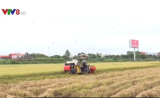 Đà Nẵng đẩy mạnh cơ giới hóa vùng sản xuất nông nghiệp