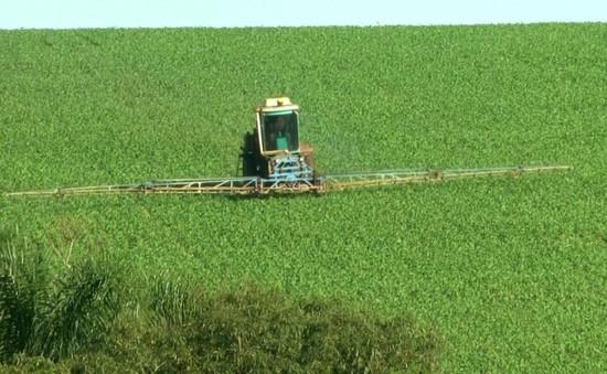 Lạm dụng chất độc nông nghiệp tại Brazil