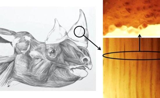 Chế tạo sừng tê giác giả để cứu tê giác thật