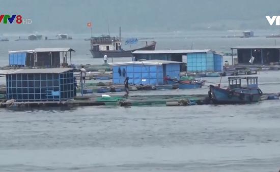 Di dời hơn 34.000 lồng bè ở huyện Vạn Ninh, Khánh Hoà