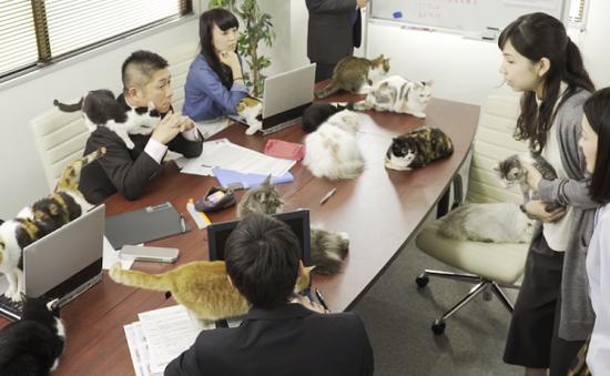 Các công ty Nhật Bản cho phép mang thú cưng đi làm