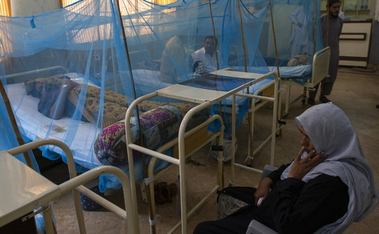 WHO cảnh báo về dịch sốt xuất huyết trên toàn cầu