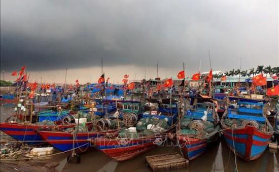 Quyết liệt các giải pháp để gỡ bỏ thẻ vàng thủy sản
