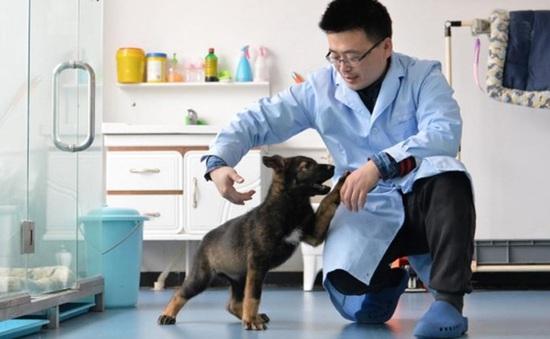 Trung Quốc nhân bản chó vô tính bổ sung vào lực lượng cảnh sát