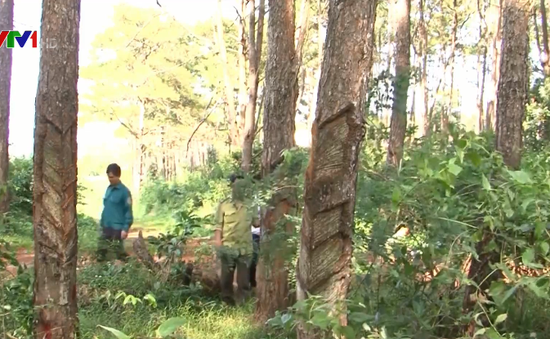 Đăk Nông lập đoàn kiểm tra bảo vệ rừng phòng hộ