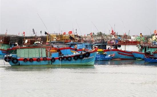 Khu vực Thanh Hóa - Bình Thuận chủ động ứng phó với áp thấp nhiệt đới