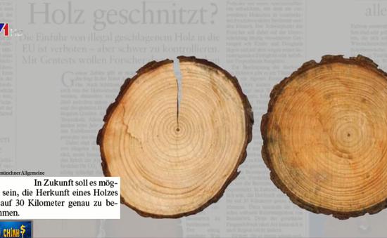 Phổ biến tình trạng buôn bán và sử dụng gỗ lậu tại châu Âu