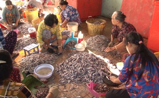 Vào mùa sản xuất mắm cá chốt