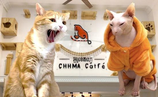 Quán cà phê mèo tại Phnom Penh, Campuchia