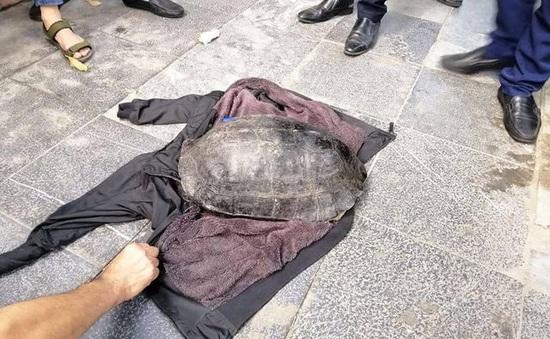 Tạm giữ đối tượng nghi câu trộm rùa ở Hồ Gươm