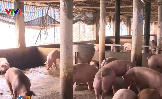 Tăng cường ngăn chặn xuất lậu lợn để ổn định nguồn cung dịp Tết