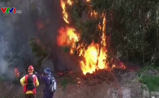 Báo động đỏ cháy rừng tại Chile