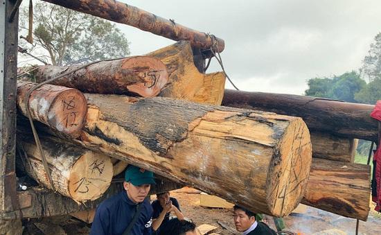 Lại phát hiện phá rừng quy mô lớn ở Đăk Lăk