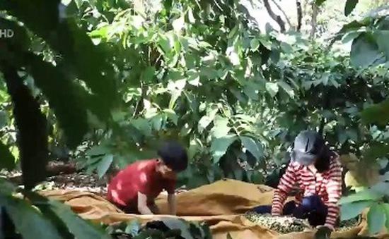 Cặp lá yêu thương: Bốn cha con