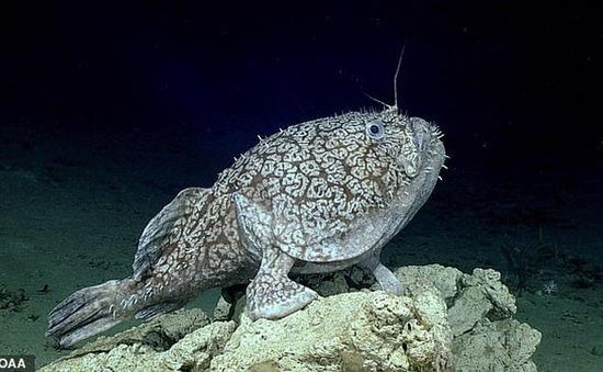Phát hiện loài cá dùng vây để đứng như đôi chân