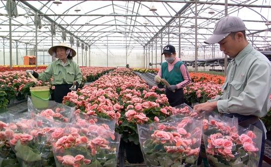 Hợp tác để giải quyết nhu cầu giống hoa mới