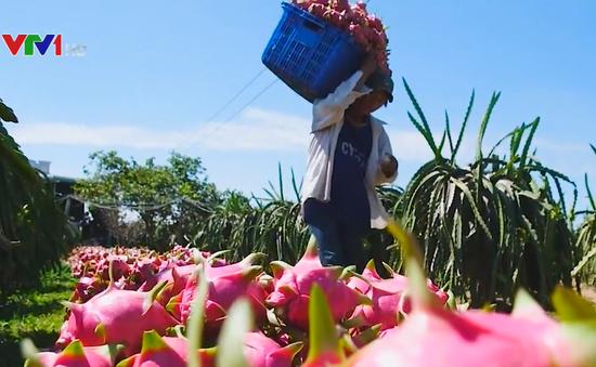 Gần 70% rau quả Việt Nam xuất khẩu sang Trung Quốc
