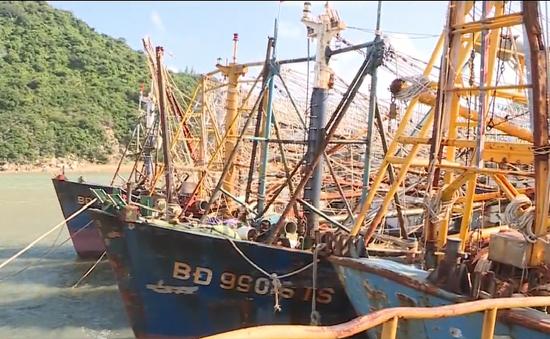 Không có chuyện ngừng cấp bảo hiểm cho tàu cá 67