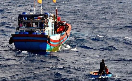 3 ngư dân Bình Định rơi xuống biển vẫn chưa được tìm thấy
