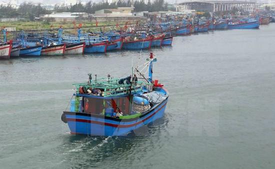 Biển động mạnh, ngư dân Cà Mau không thể ra khơi