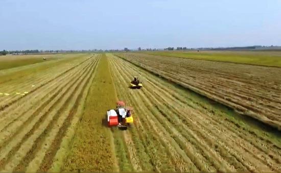 Tìm đầu ra cho gạo xuất khẩu
