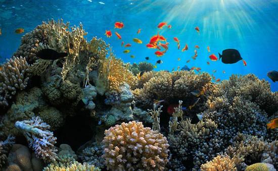 Dầu loang đe dọa đảo san hô lớn nhất thế giới