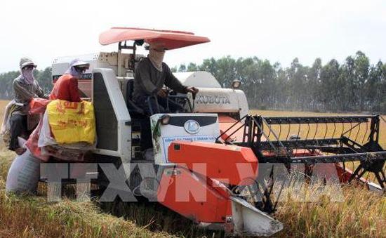 Sớm tháo gỡ khó khăn, nỗ lực khơi thông thị trường gạo