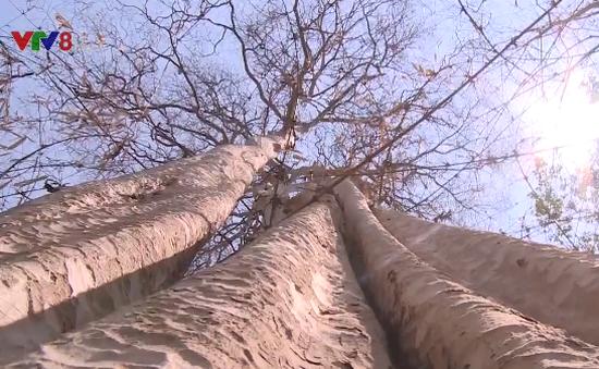 Cảnh báo hàng trăm nghìn hecta rừng tại Đắk Lắk có nguy cơ cháy cao