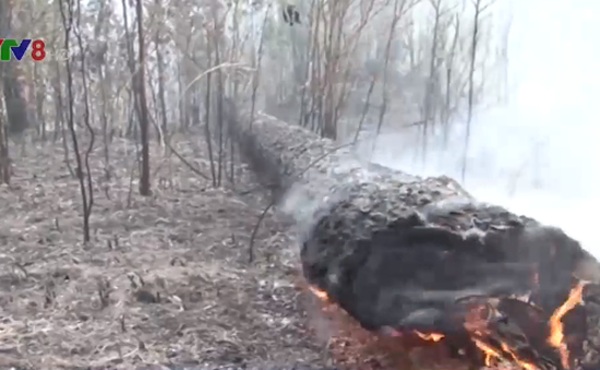 Cháy rừng thiêu rụi gần 5 hecta rừng tái sinh tại Lâm Đồng
