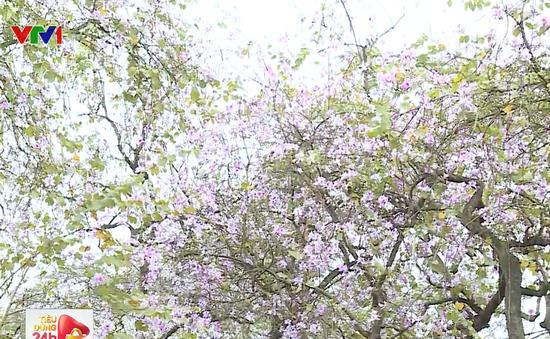 Hòa mình vào vẻ đẹp của những loài hoa Xuân Hà Nội