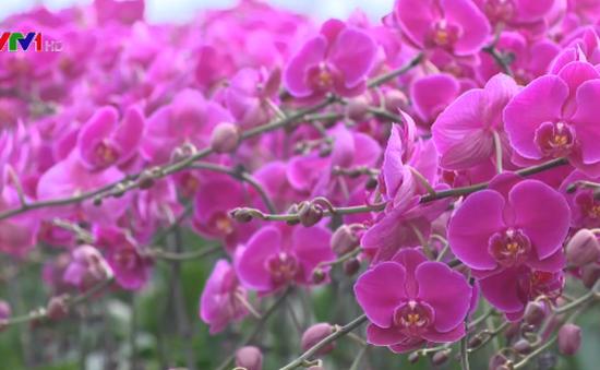 Thung lũng hoa - Điểm hẹn mới của du lịch Ninh Bình