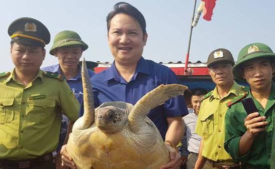 Hà Tĩnh thả rùa biển quý về môi trường tự nhiên