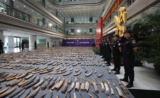 Trung Quốc thu giữ hơn 7 tấn ngà voi