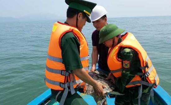 Thả rùa quý hiếm về biển